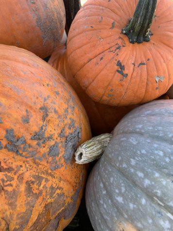 Like most small businesses, Tim's has been impacted by the pandemic this season. Be sure to support local businesses and take some time to safely visit your local pumpkin or apple farm to get yourself some lovely autumnal decorations. (Photo by Aiden Keenan).
