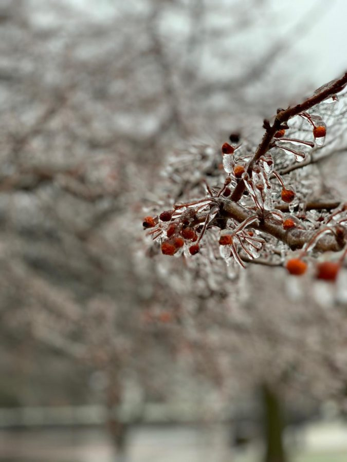 Beyond snow, branches are covered in a layer of ice. Here, crabapples are encased in a solid layer of ice on a frigid winter day. (Photo courtesy of Cooper Smith, '22).