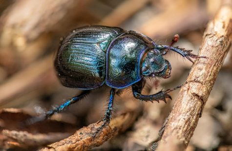 Beetles, Div Miller