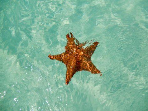 A starfish in the sea. (Photo courtesy of Federica Bisso, Unsplash)