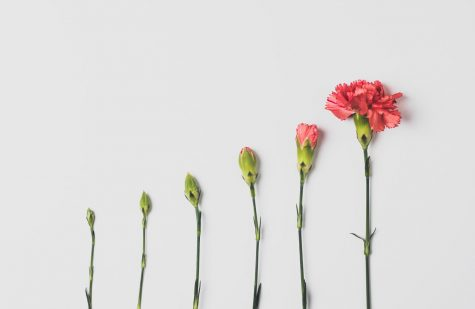 How a flower grows and changes. (Edward Howell VI, Unsplash)